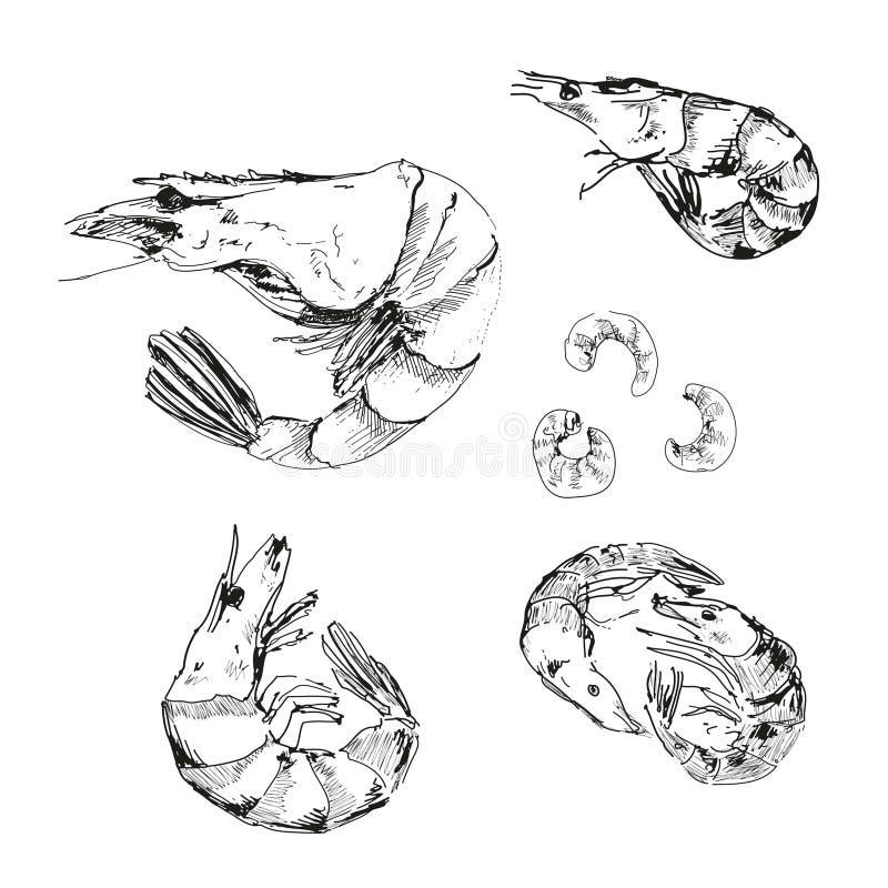 Skaldjur. Räkor. royaltyfri illustrationer