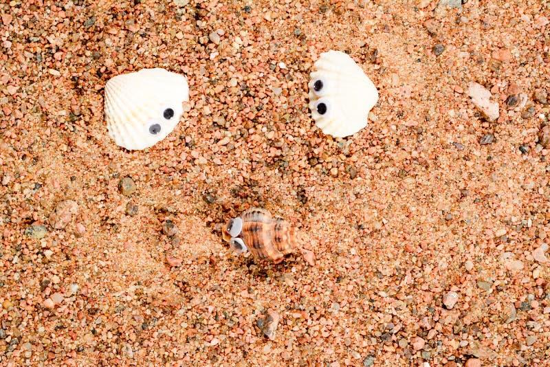 Skalet för två hav med googly ögon ligger på sanden, och två av dem ser de, närbildmakro royaltyfria foton