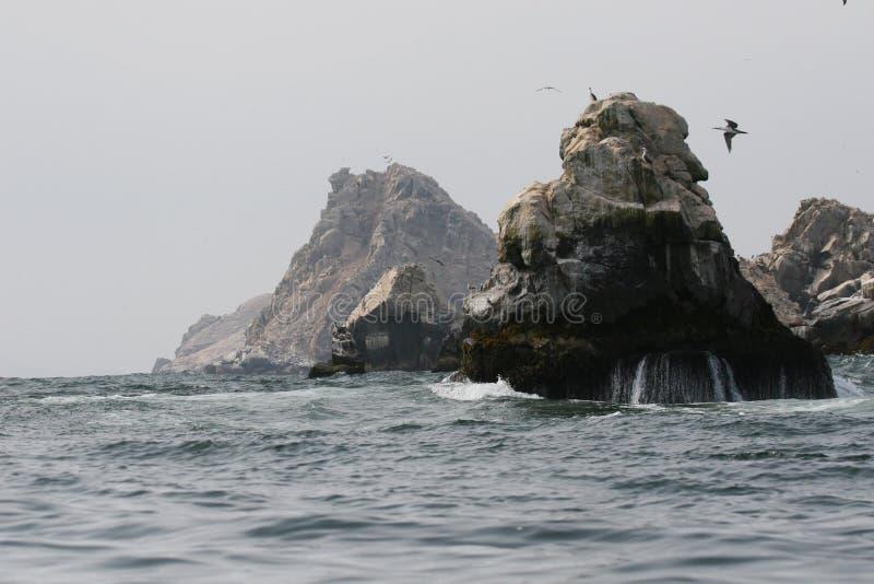 Skaliści wychody z morskimi ptakami w Peru fotografia royalty free