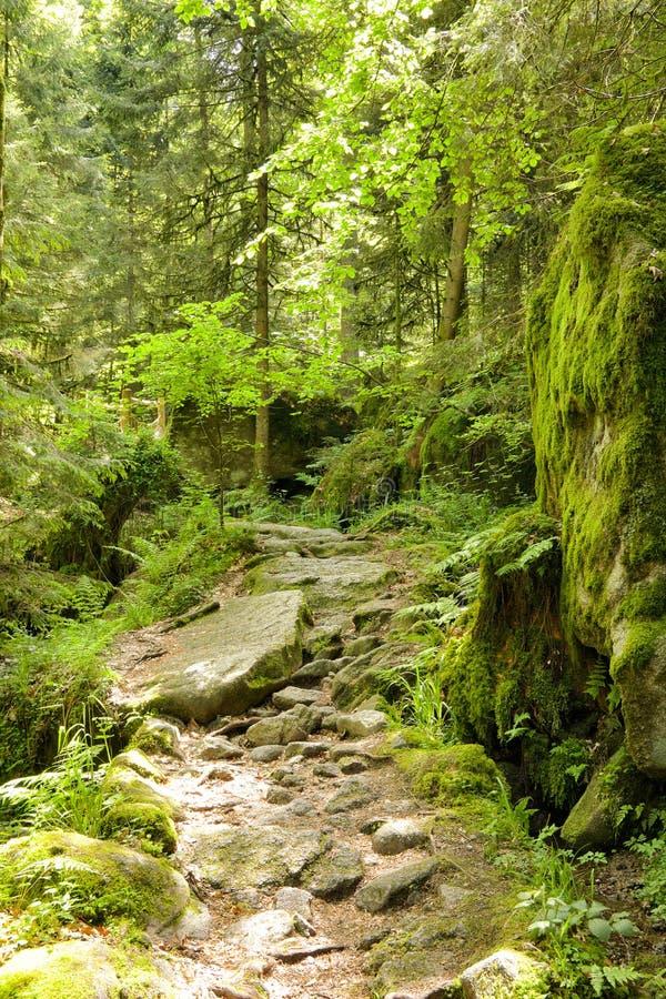 Skalista Czarna Lasowa ścieżka obraz royalty free