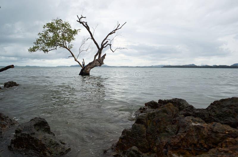 Skalista linia brzegowa i prawie nagi drzewny dorośnięcie w wodzie obrazy royalty free