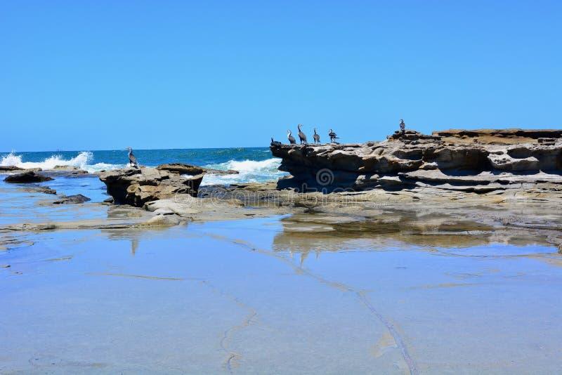 Skalista linii brzegowej seascape tła scena z seabirds zdjęcie royalty free