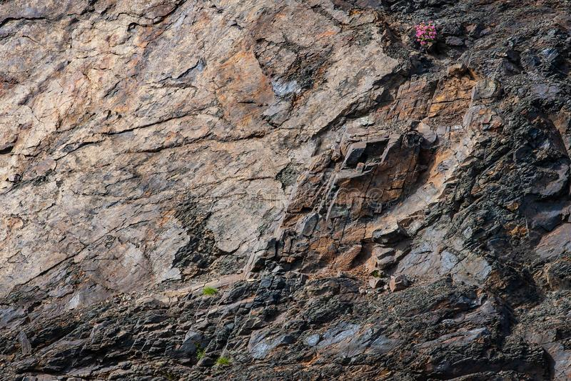 Skalista powierzchnia jako naturalny abstrakcjonistyczny tekstury tło obraz stock