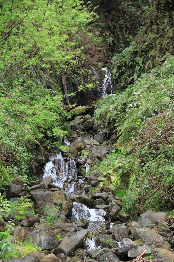 Skalista siklawa po środku Madeira obrazy royalty free