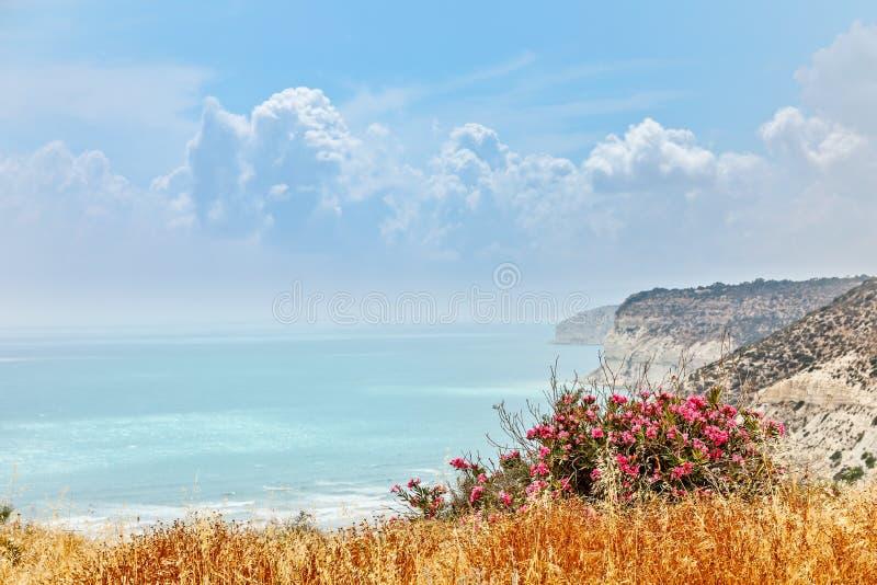 Skaliste falezy Kurion wyrzucać na brzeg z chmurami i czerwień kwitnie w obraz royalty free