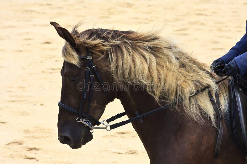 Skalistej góry koń zdjęcie royalty free
