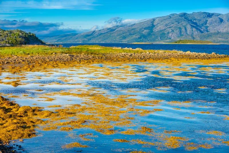 Skalisty brzeg halny jezioro w jesień ranku zdjęcie royalty free
