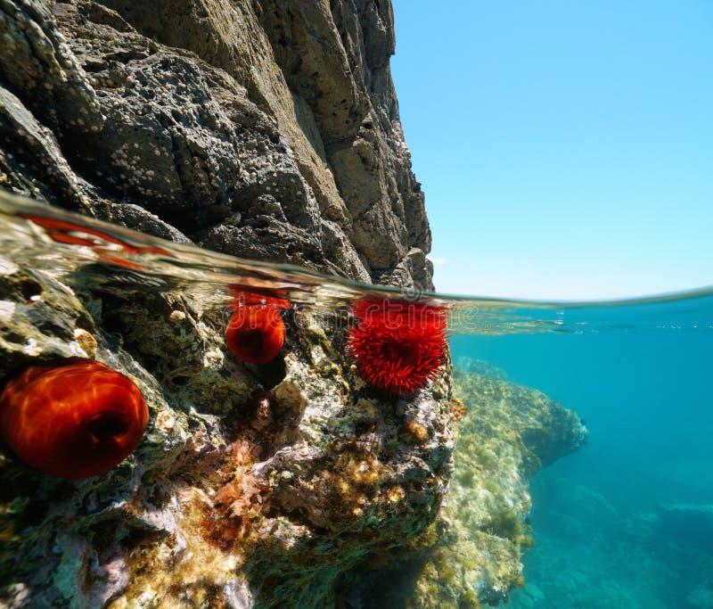 Skalisty brzeg z anemonu morzem śródziemnomorskim fotografia stock