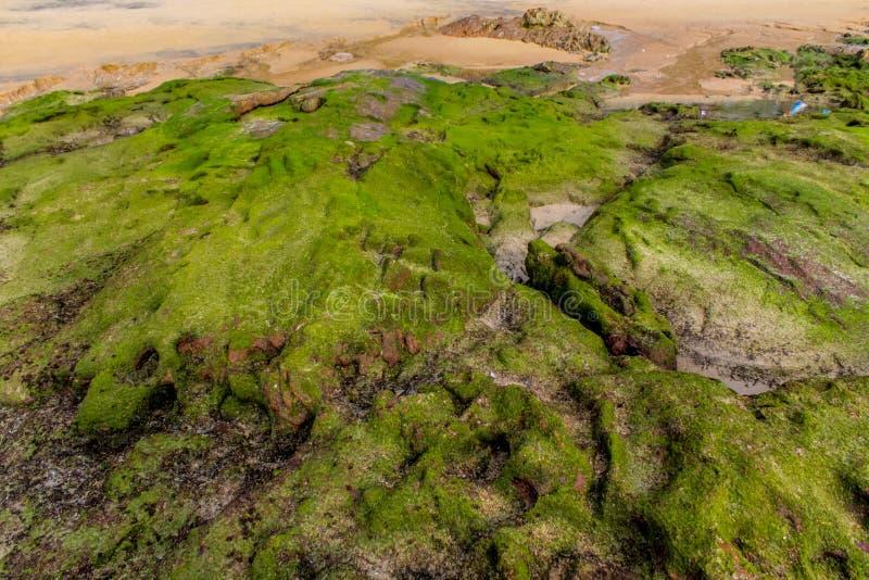 Skalisty denny wybrzeże zakrywający z gałęzatką fotografia stock