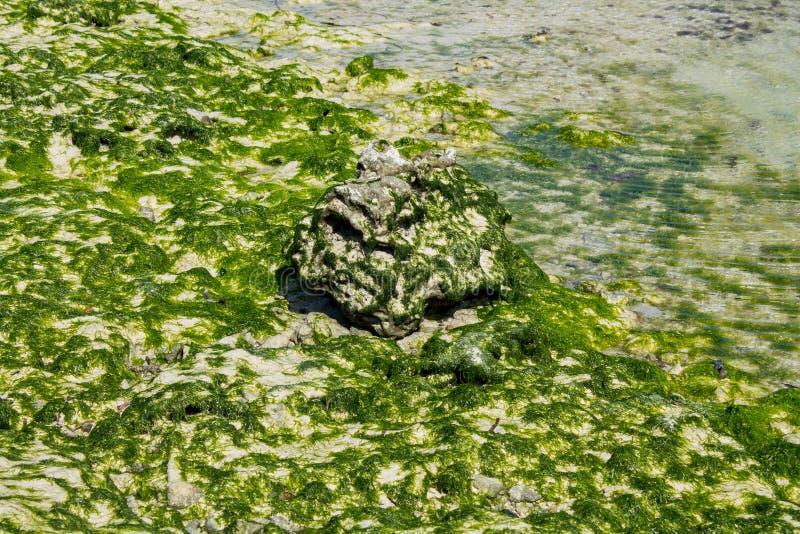 Skalisty denny wybrzeże zakrywający z gałęzatką i fala zdjęcie royalty free