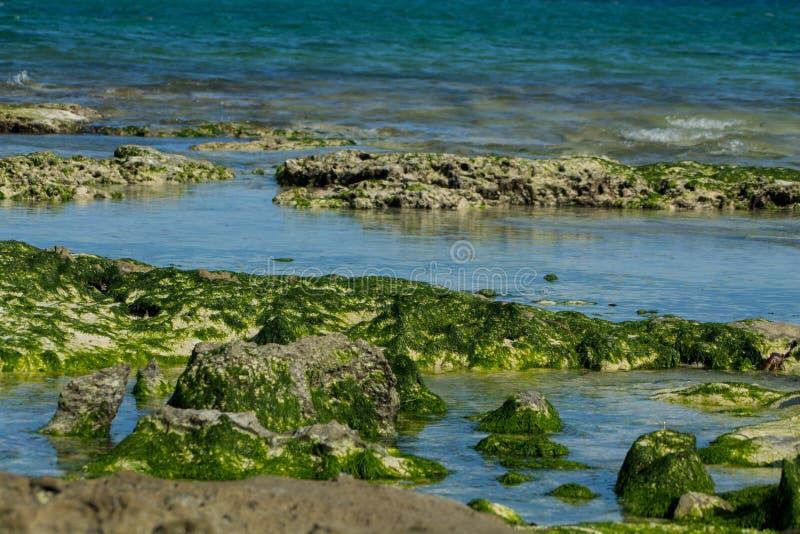 Skalisty denny wybrzeże zakrywający z gałęzatką i fala zdjęcie stock