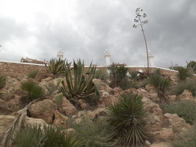 Skalisty kaktusa ogród fotografia royalty free