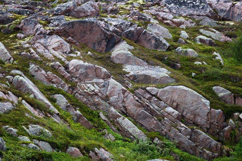 Skalisty kamienia wybrzeże Barents morze, przerastający z mech zdjęcie royalty free