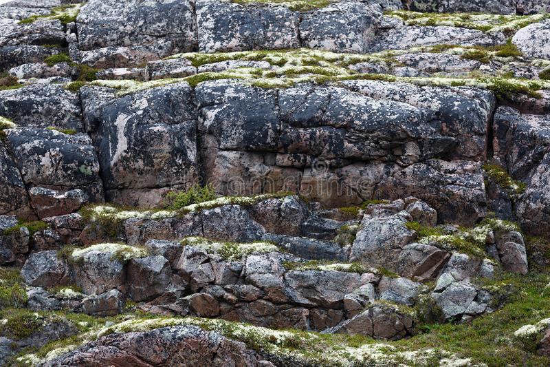 Skalisty kamienia wybrzeże Barents morze, przerastający z mech zdjęcia royalty free