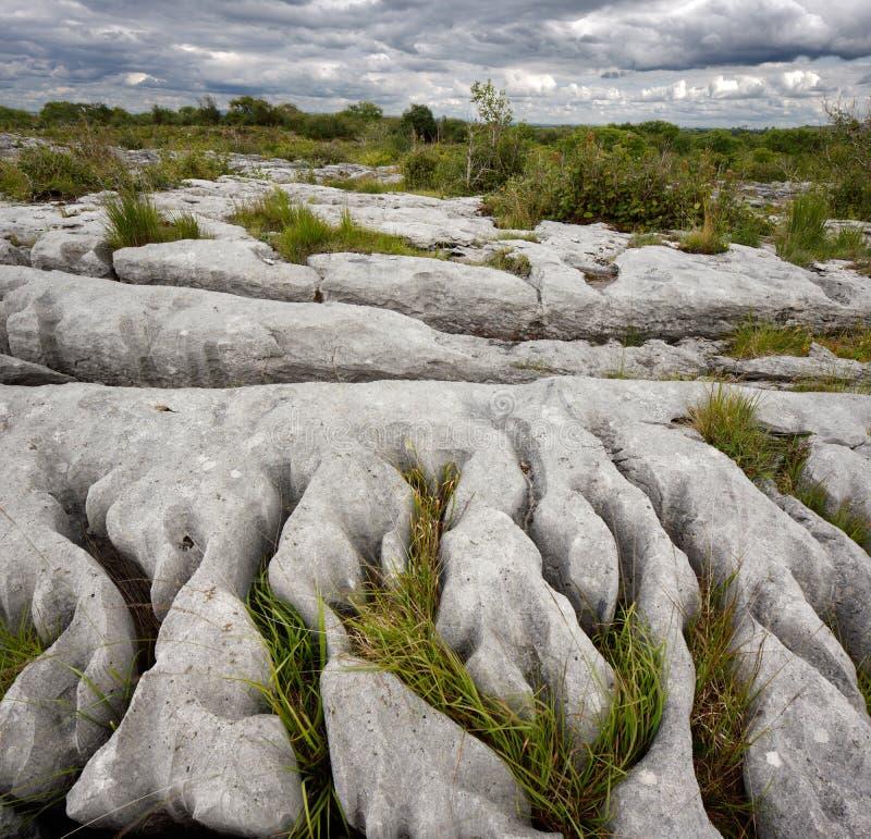 Skalisty krajobraz Burren w okręgu administracyjnym Clare, Irlandia obrazy royalty free