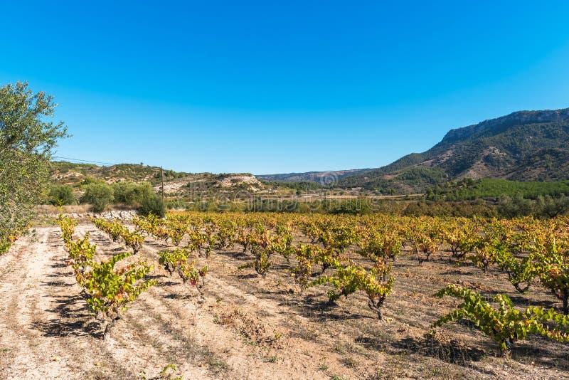 Skalisty krajobraz w Siurana De Prades, Tarragona, Catalunya, Hiszpania Odbitkowa przestrzeń dla teksta obraz stock