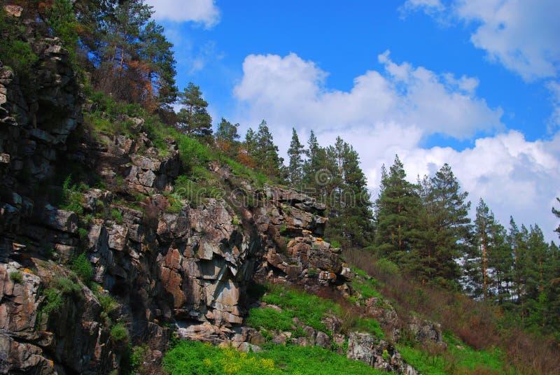 Skalisty skłon z lasem w lecie zdjęcie royalty free