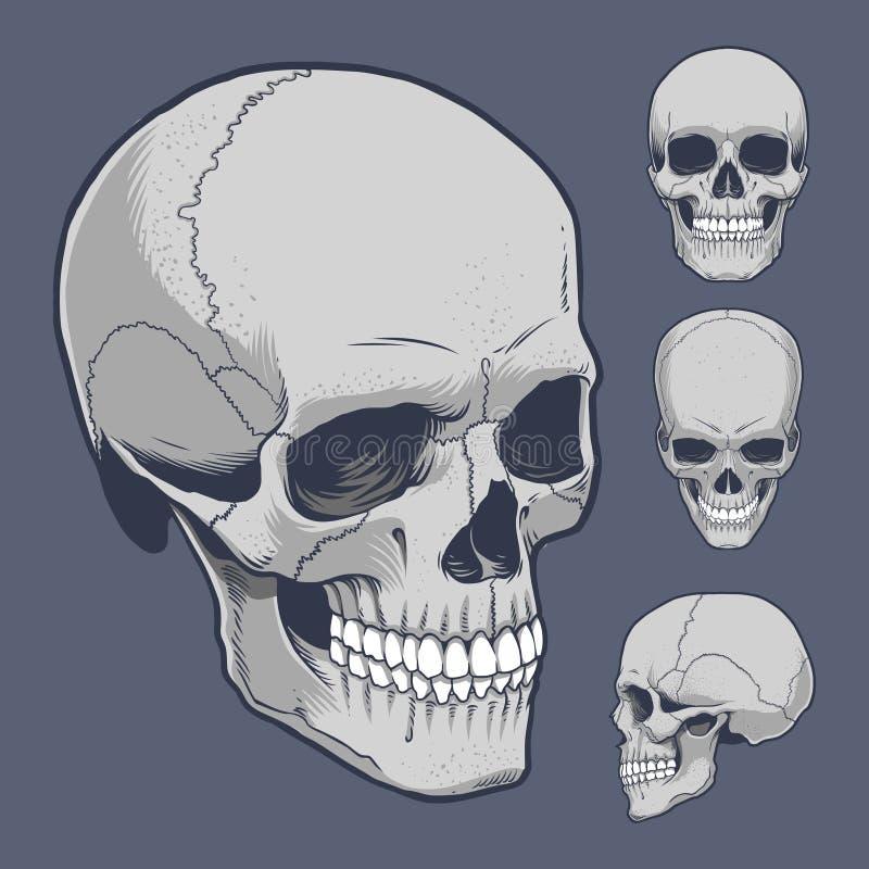 skallar stock illustrationer