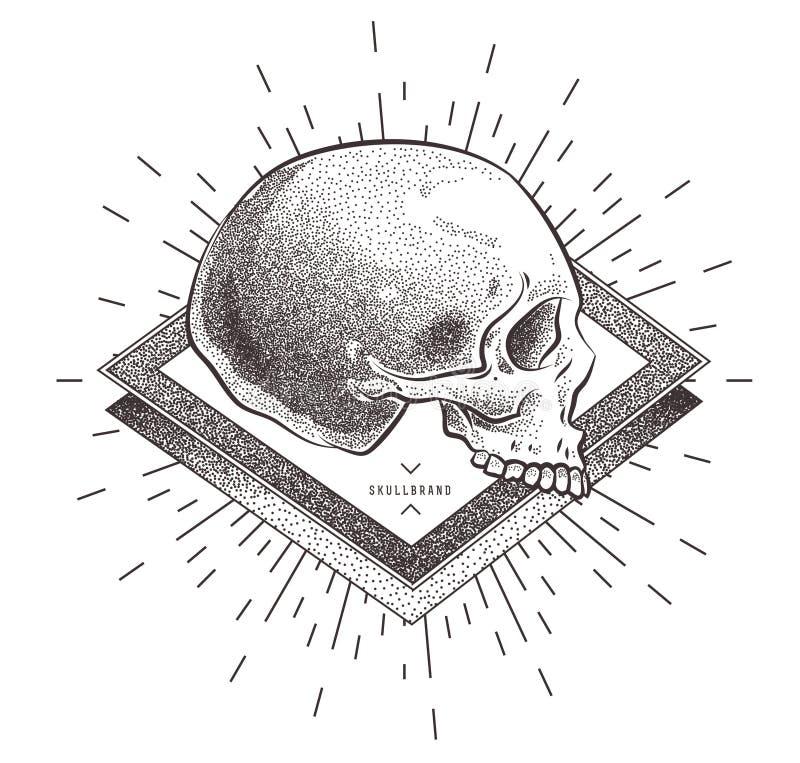 Skalle med geometriska abstrakta beståndsdelar illustratören för illustrationen för handen för borstekol gör teckningen tecknade  royaltyfri illustrationer