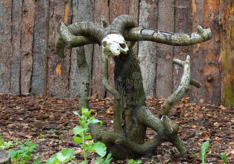 Skalle med horn på ett sågat träd royaltyfri foto
