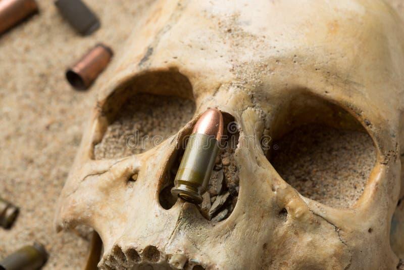Skalle som ligger i sanden, spritt gevär arkivfoton