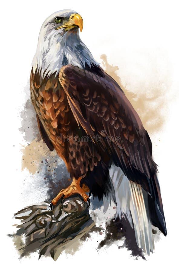 skallig örn stock illustrationer