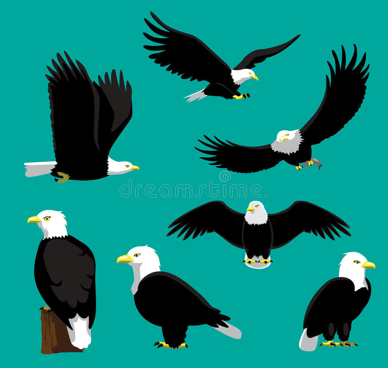 Skalliga Eagle Cartoon Vector Illustration stock illustrationer
