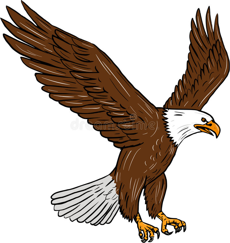 Skalliga Eagle Flying Drawing royaltyfri illustrationer
