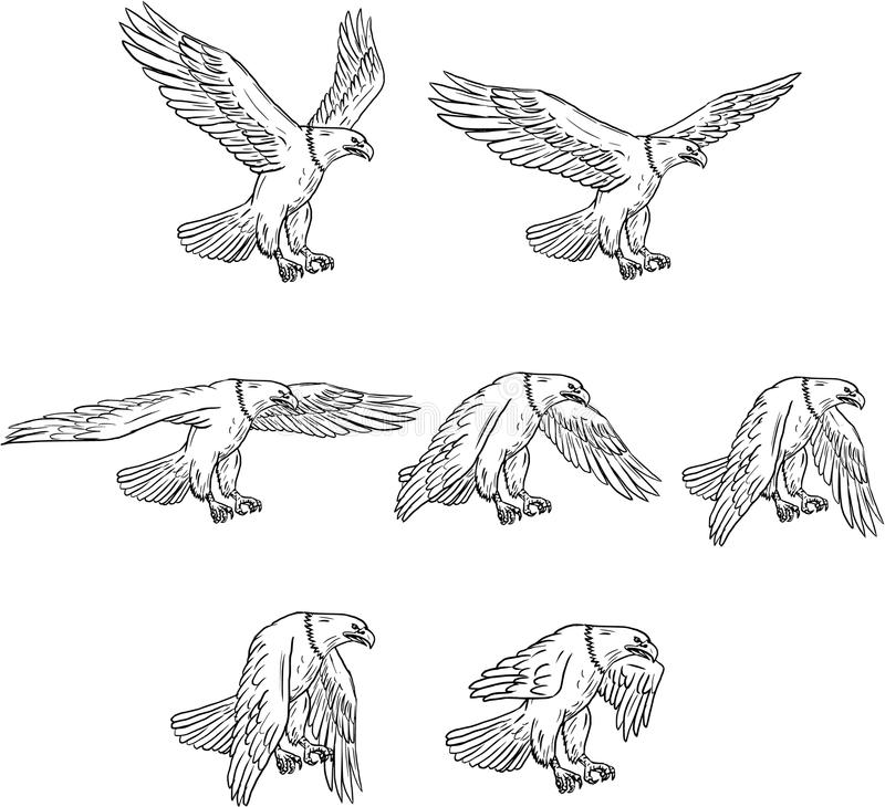 Skalliga Eagle Flying Drawing Collection Set stock illustrationer