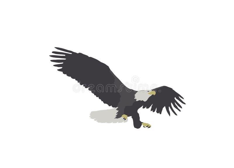 Skalliga Eagle Landing Illustration stock illustrationer