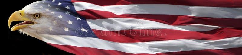 Skalliga Eagle och amerikanska flagganbaner arkivfoton