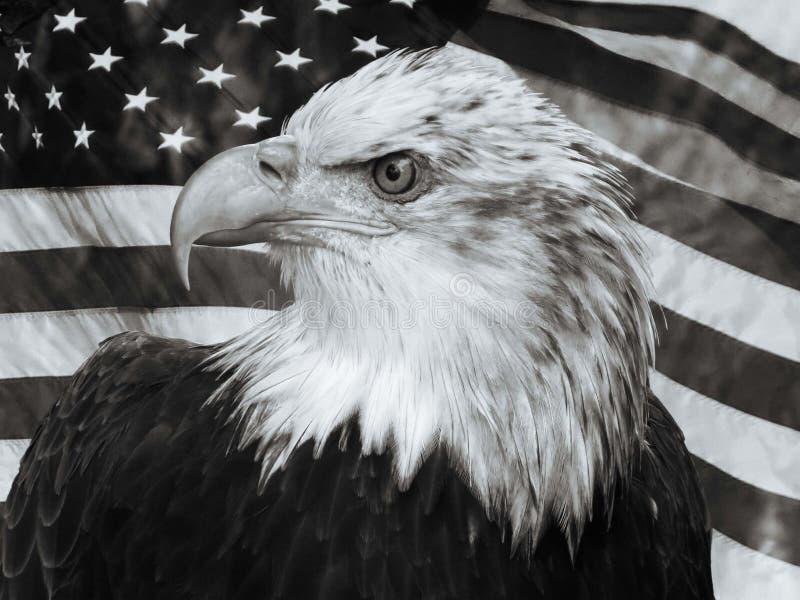 Skalliga Eagle U S En flaggastående arkivfoto