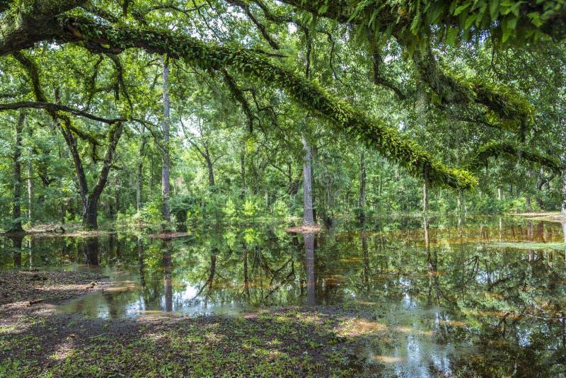Skalliga träd som reflekterar i vattnet royaltyfri foto