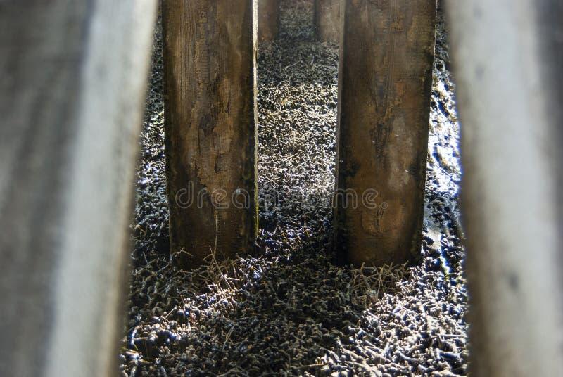 Skalowanie dom, drewniana budowa i cierń ściana tarnina, wiążemy na czym ciec puszek i wyparowywa brine i obraz royalty free