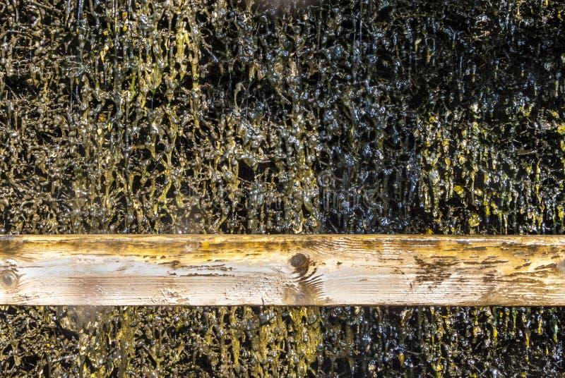 Skalowanie dom, drewniana budowa i cierń ściana tarnina, wiążemy na czym ciec puszek i wyparowywa brine i zdjęcia royalty free