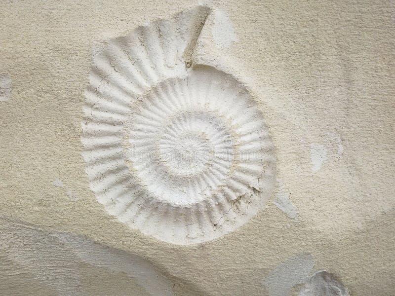 Download Skamielina zdjęcie stock. Obraz złożonej z morze, stary - 57671614