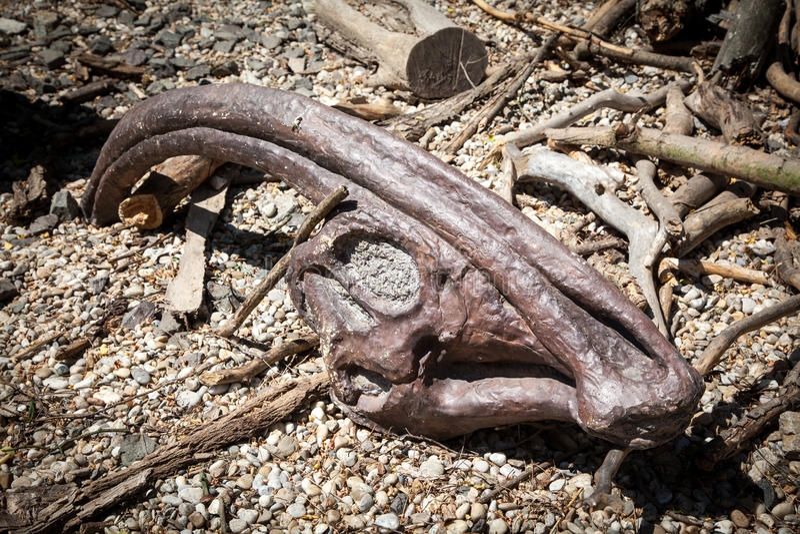 Skamielina dinosaur obrazy royalty free