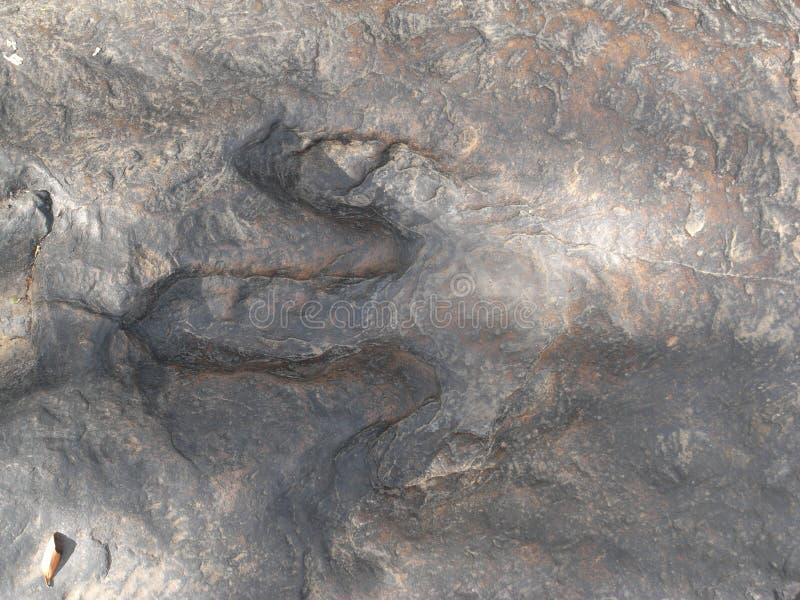 Skamielina trawożerny dinosaura ` odcisk stopy przy Phu Kum Khao zdjęcie royalty free