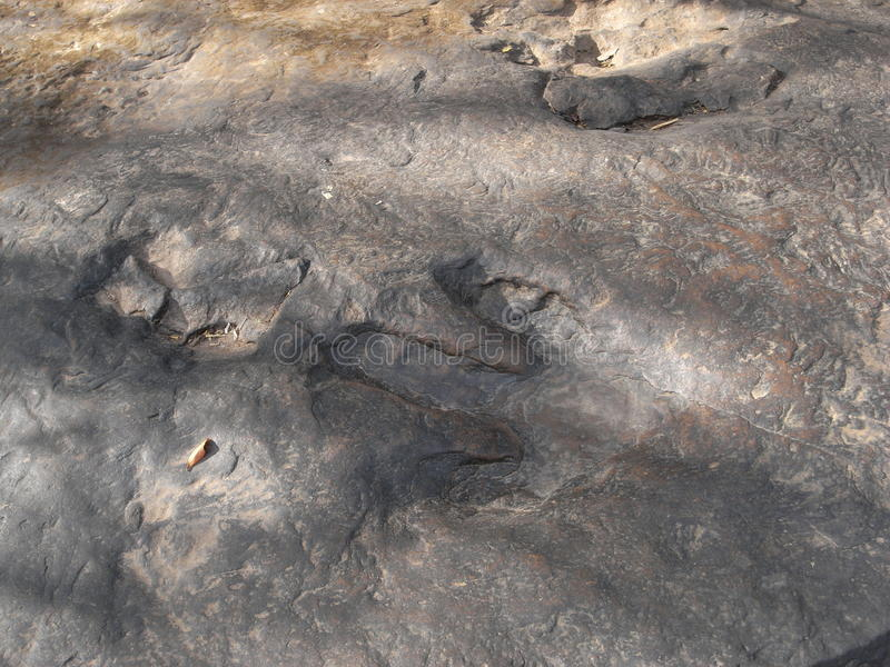 Skamielina trawożerny dinosaura ` odcisk stopy przy Phu Kum Khao obrazy stock