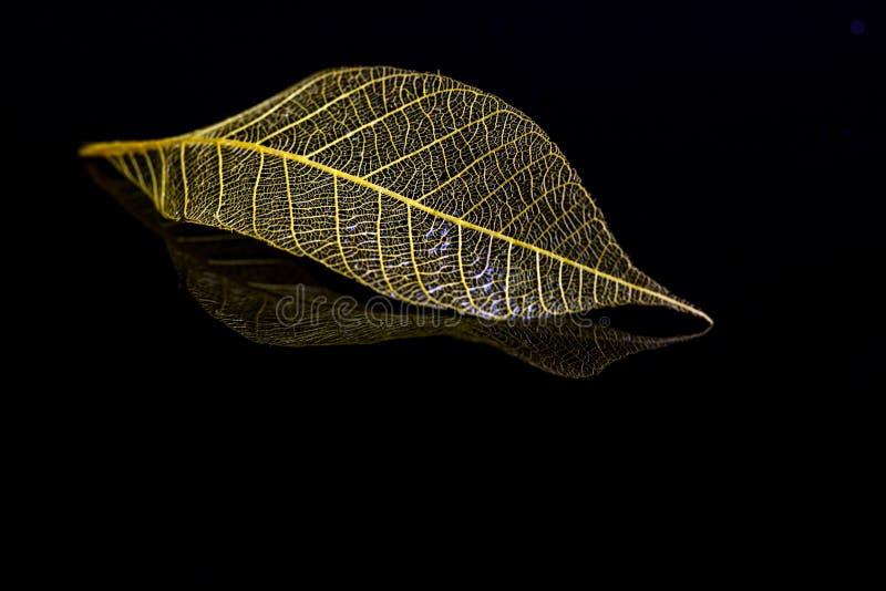 skamieniała liści, zdjęcia stock
