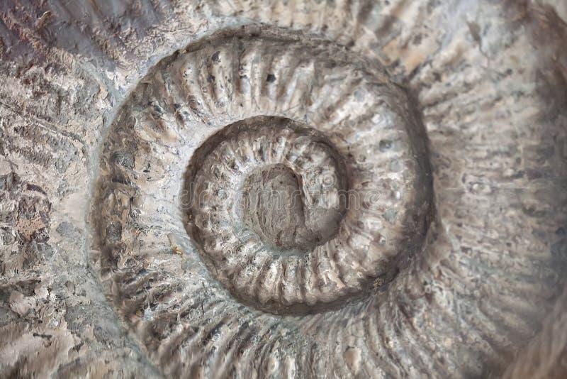 Skamieniała skorupa wzoru spirali tekstura obraz stock