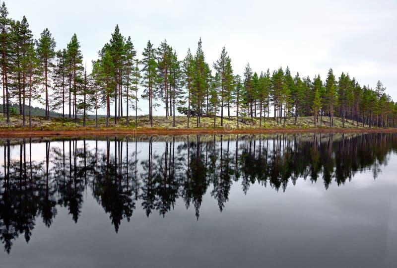 Skandinavischer See mit Nadelbäumen lizenzfreie stockfotos
