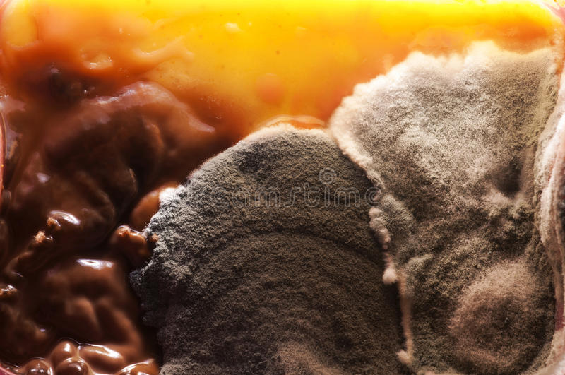 Skapa svampen arkivfoto