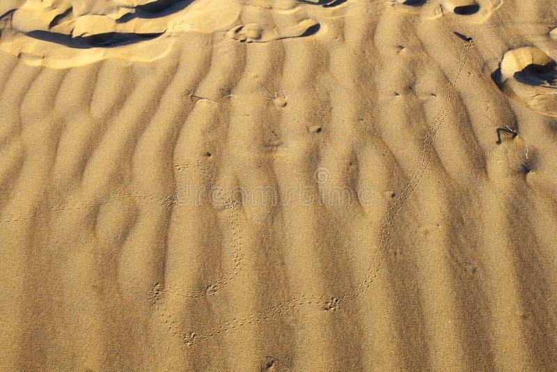 Skarabéfotspår i sanddyn i Wahiba sander royaltyfri fotografi