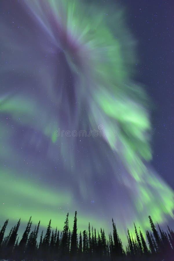 Skarp nordliga ljus och skog arkivfoto
