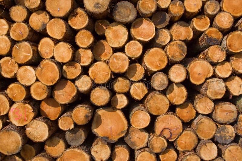 skatalogowania brogujących drzewa obraz royalty free