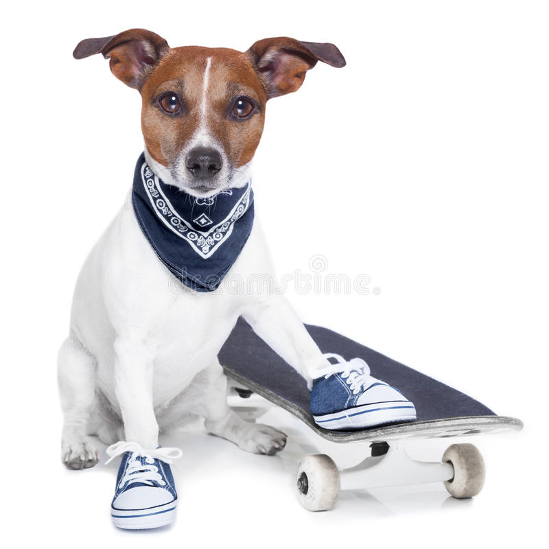 Skateboard dog stock images