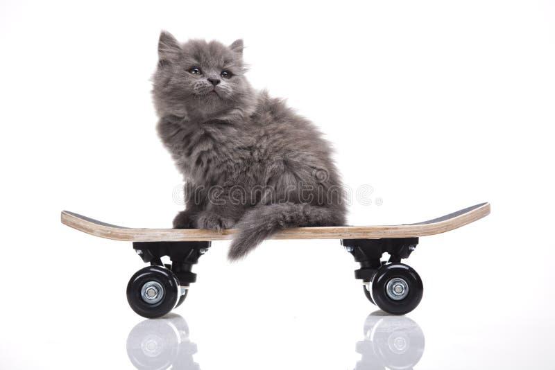 Skateboard, Little gray kitten stock photography
