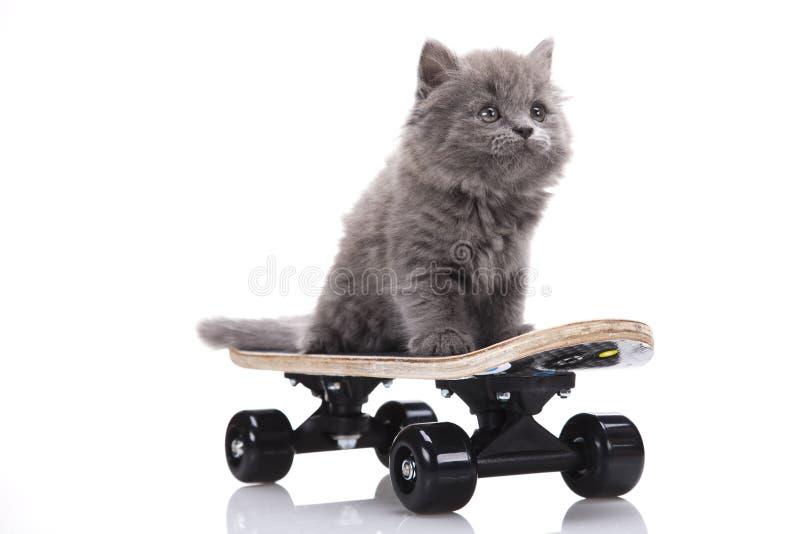 Skateboard, Little gray kitten royalty free stock photography