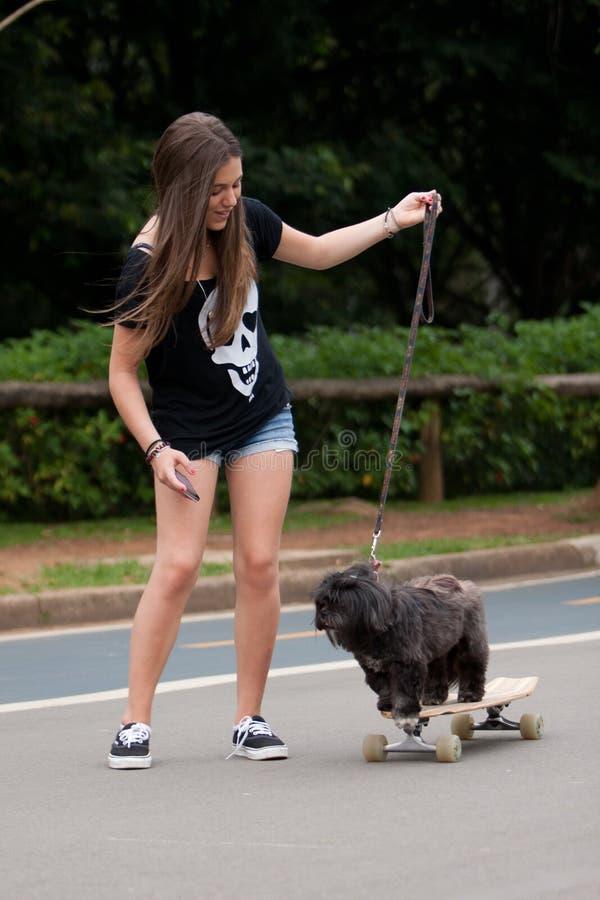 Skateboarding Dog royalty free stock photography